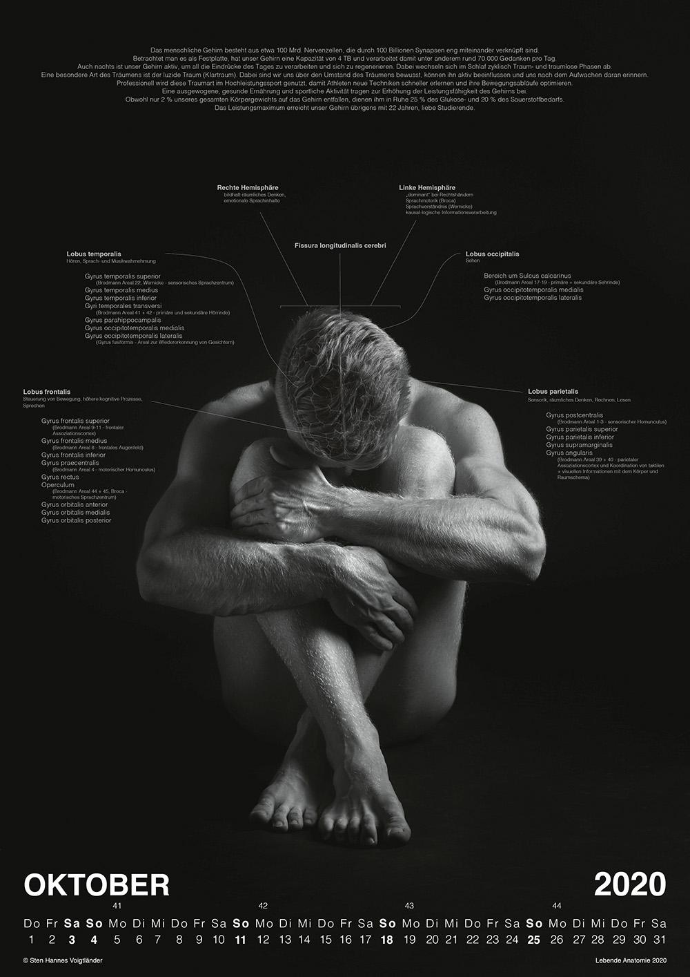 Lebende Anatomie Kalender Vorschau 10
