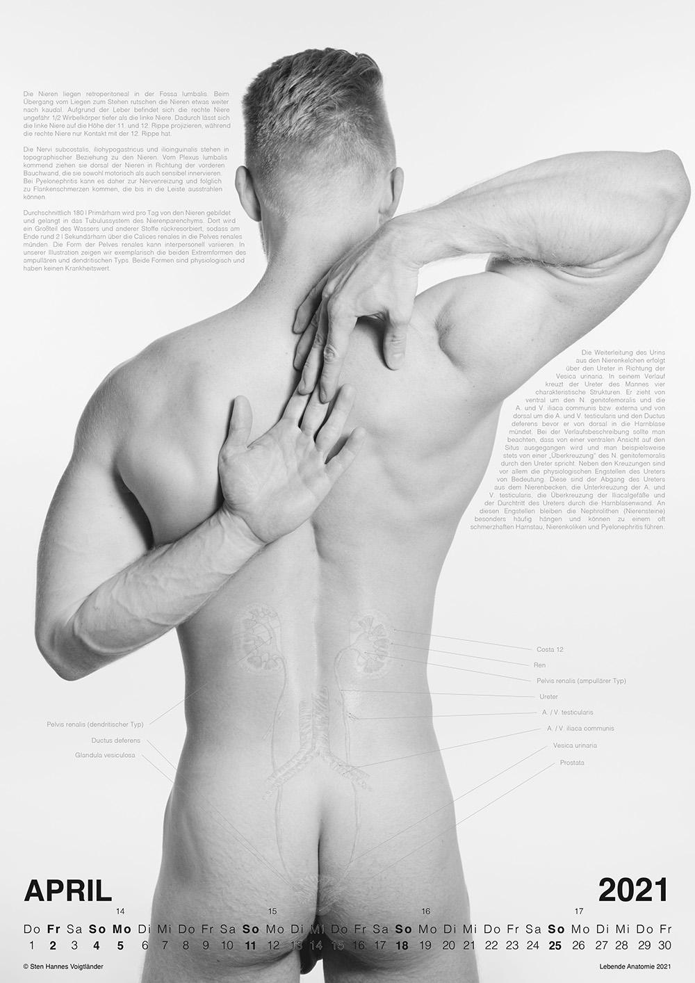 Lebende Anatomie Kalender 2021 VORSCHAU 04
